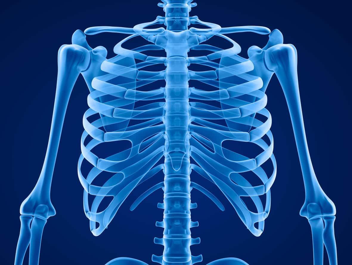 Les os pouvant être atteints de l'ostéoporose